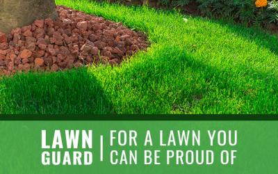 """Does a """"Weed Free Lawn"""" Really Exist?"""