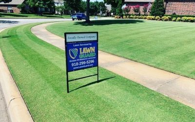 How to Choose the Best Lawn Care and Pest Control Company