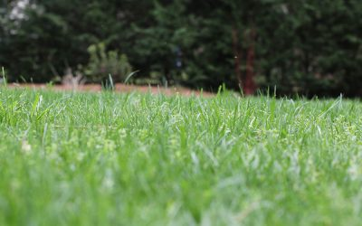 3 Tips for Your Fescue This Fall
