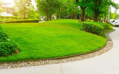 Lawn Care & Curb Appeal